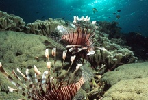 Onderwater wereld