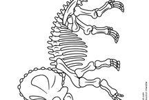 anatomies, squelettes