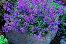 Flower Garden/Patio Ideas / I wish! Love my flower beds/miss my flower beds! / by Kate Chidester