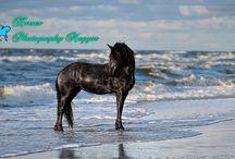 Horses Photography Magyar / Facebook page