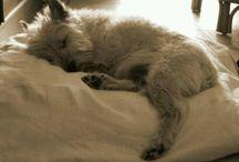 Dogs- I need one, like now!