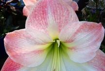 flower inspiration3 / by Dede Turner