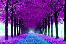naturaleza beautiful