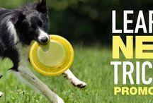 Learn New Tricks! Imaging Promo
