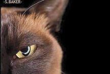Gatti e non solo