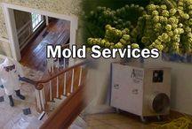 Illinois Mold Treatment