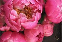 kytky-fotky