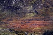 Fotos Irland