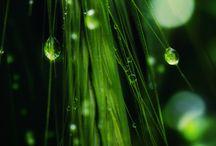 Green - Heals my soul