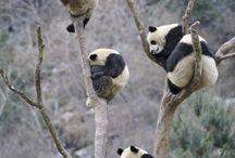 Cute animals / Soft and cuddly animals