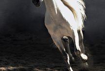 Tiere  1 / Tiere allgemein, Tierfotographen, Tierhaltung, Nutztiere und ihr trauriges Leben und Ende, Umweltverschmutzung