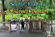 WDW: Animal Kingdom