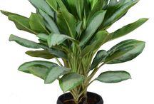 Indoor Plant / Growing indoor plants is easy and just as fun as having an outdoor garden.