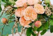 Peachy Perfect / by Shannon Leahy Events