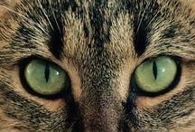 CAT / szőrösök