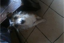 NEED A FAMILY- TOUTOUS A SAUVER / Urgences animales, adoptions urgentes- Animal Emergencies and rescues