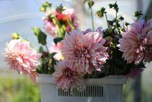 varieties of flowers