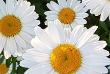 Natural plants and flowers, Luonnonkasvit ja kukat