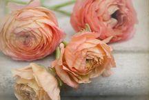 Flowers. / by Erin Stevens