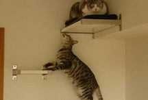 Juegos gatos