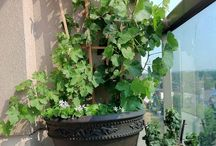 Terrasse planter
