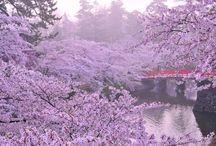 Beautiful landscapes