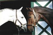 Horses / by Hilary Aleksa Harwell