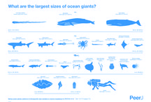 the largest sizes of the ocean