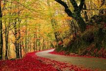 Paysages forêts