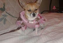 Adelita / Adelita y su ropa