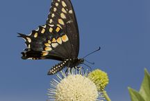 Arizona wildlife