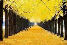 Yellow / Yellow in the world