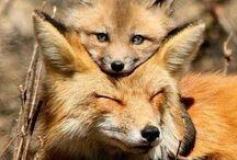 Cuty animals