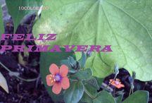FELIZ PRIMAVERA / La primavera nos trae flores y olores, colores y amores, feliz primavera a todos!!!