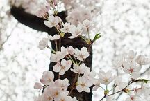 flower/decor