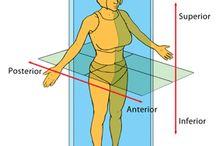 Exercise Anatomy Physiology