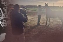 Noticias sobre el caballo árabe