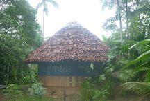 Ayahuasca Retreat Iquitos Peru