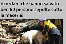 I terremoti / Terremoti in Italia