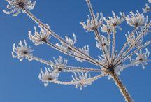 Virikekuvia kuvikseen, talvi