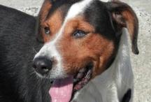 "Nos chiens séniors à l'adoption / Association Galia ""Vendée"""