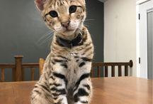 savanah.cat