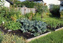Raised Garden Beds / by Patti Whitaker