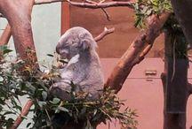 Dieren die in Dream Zoo&Co moeten komen / Deze dieren zouden in ieder geval een plaatsje moeten hebben in Dream Zoo&Co
