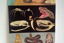 Vintage Animal Charts