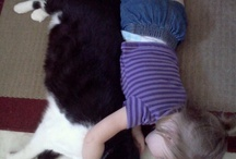 Cats / Love me, love my cats! / by Natalie Butterfield