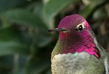 hummingbirds colors