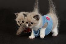 Kitties muah