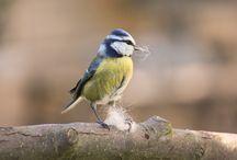Aves!!! /  En su entorno , Libres.... .