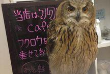 Cafe japan